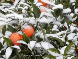 orangessnow3