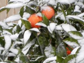 orangessnow4