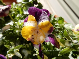 petalssoap1