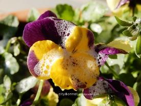 petalssoap2