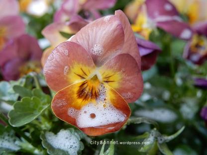 petalssoap5