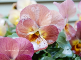 petalssoap7