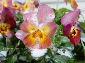 petalssoap8