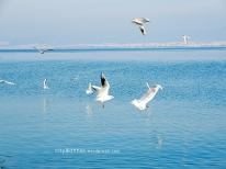 seagulls6