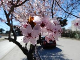 blossom10