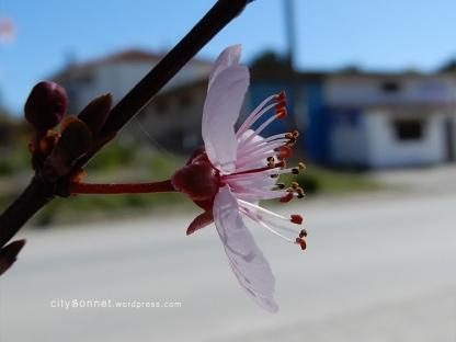 blossom14