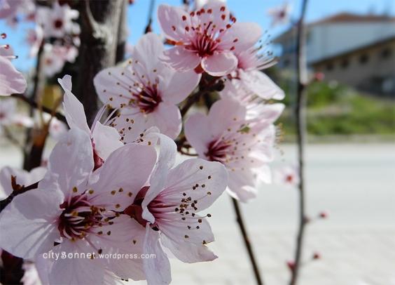 blossom16