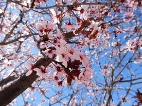 blossom6