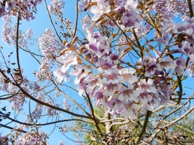 treeflower2