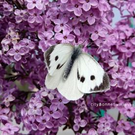 butterfly9