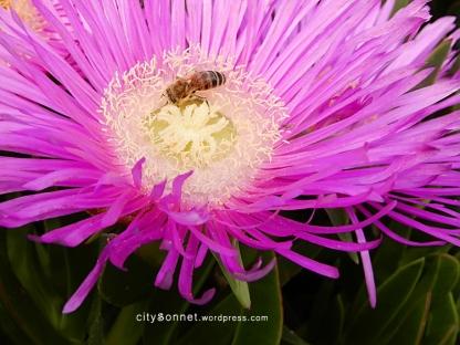 flowerbee1