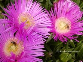 pinkflowers1
