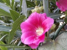 pinkflowers11