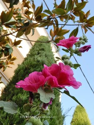 pinkflowers15