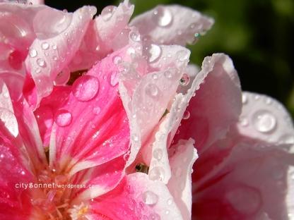 waterdrops1