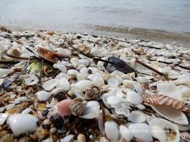 seashells10