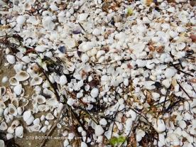 seashells12