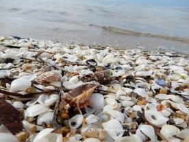seashells14