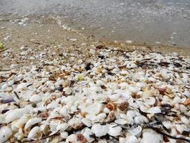 seashells17