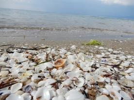 seashells7