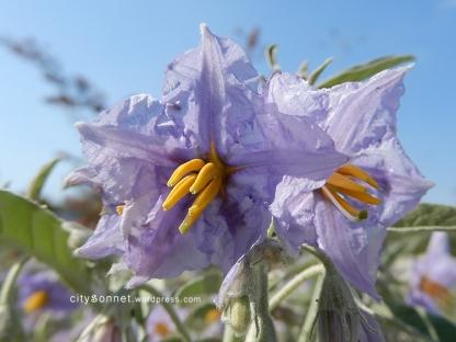 purpleflowers3
