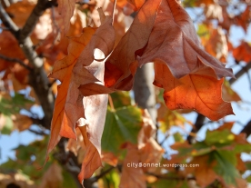 autumnleaves3