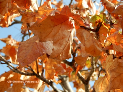 autumnleaves4
