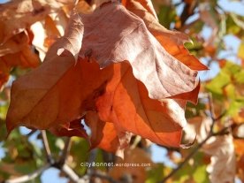 autumnleaves5
