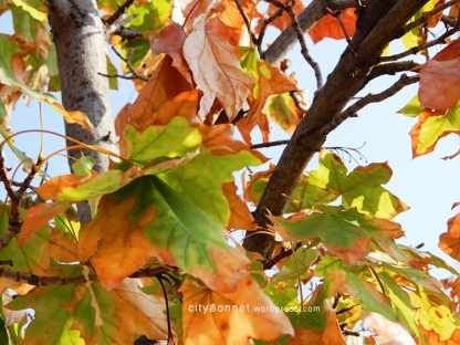 autumnleaves6