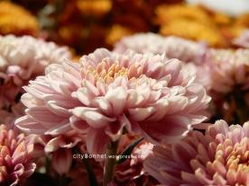 flower25