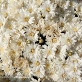 flowers11