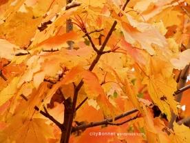 autumnleaves16