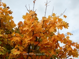autumnleaves18