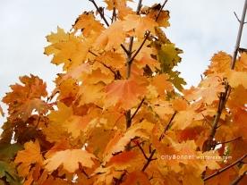 autumnleaves19