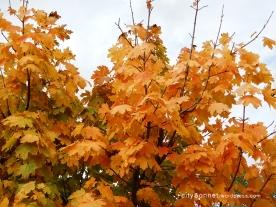 autumnleaves20