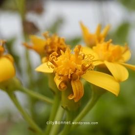 flower28