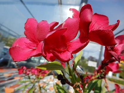 flower30