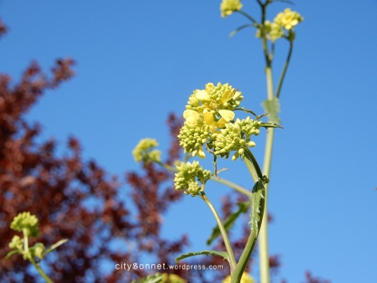flower26