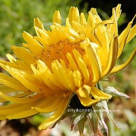 flower40
