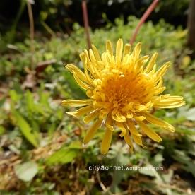 flower57