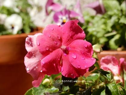flowerpink10