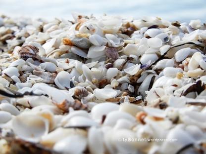 seashells18