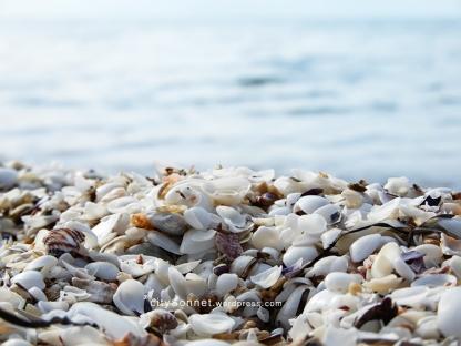 seashells20
