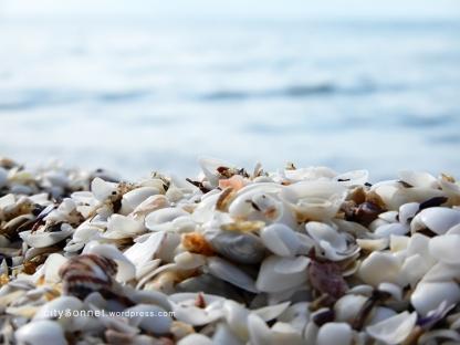 seashells21
