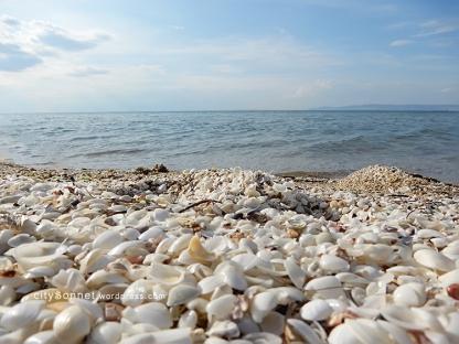 seashells23
