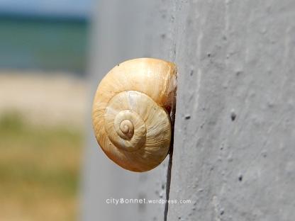 snailshell1