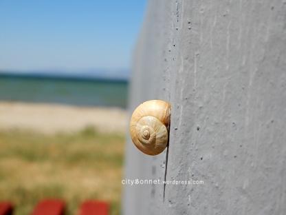 snailshell2